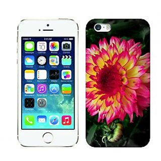 Trilmil Premium Design Back Cover Case for Apple Iphone 5 PRTi5A01426