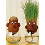 Grass Grow Head -imported, Very Attractive  To Use Paper Weight Or Showpiece