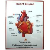 Anti Radiation - Heart Guard-Cogent Buy 1 Get 1 Free
