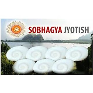 Mantra siddha 7 pcs Very Rare Gomati Chakra Big Each Weight 3.5 Gram Gomti Chakr