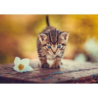 Mesleep Cat Canvas