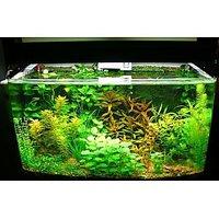 Aquarium Plant Seeds (30 Seeds/Bag)