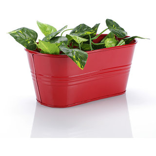 Oval Planter Small Red