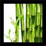 Bamboo Print Wall Art