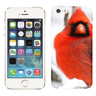 WOW Printed Back Cover Case for Apple iPhone 5C