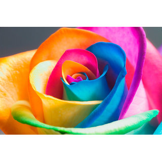 Seeds-Rainbow Rose Package Includes Instruction Paper To Grow Your