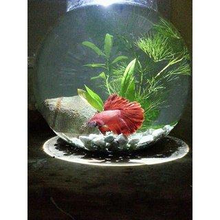 Buy betta fish setup bowl online for Order betta fish