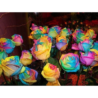 Seeds-Rainbow Rose - Pkt Of 20