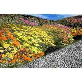 Affordable Art India Nature Abstract Canvas Art AEAT11b