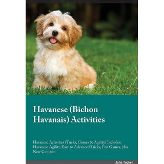 Havanese Bichon Havanais Activities Havanese Activities (Tricks, Games  Agility) Includes