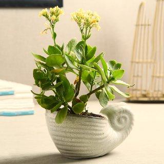 Unravel India Ceramic Snail Off-White Planter