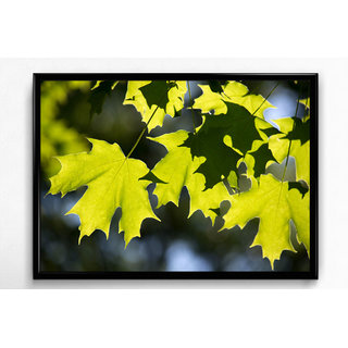 Wall Frame of Natures Beautiful Selfie LBFB-10