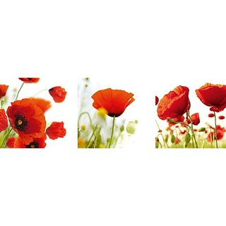 Platin Art Peel nStick Prints Wall Decals, Poppy Field