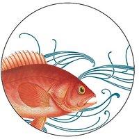 Caskata Studio 12 Count Paper Coasters In Box, Fish