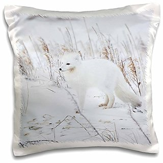 3dRose pc_205731_1 Arctic Fox in Winter Churchill Wildlife Management Area Churchill MB Pillow Case, 16