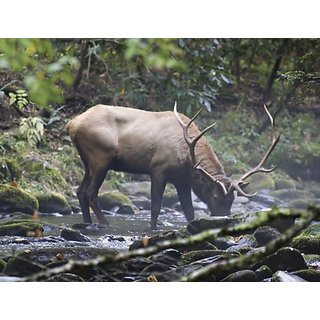Brewster UMB91065 96-Inch by 126-Inch Elk - Morning Drink Wall Mural