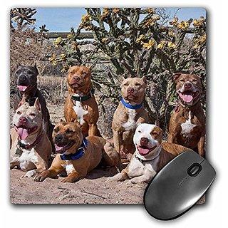3dRose LLC 8 x 8 x 0.25 Inches Mouse Pad, American Pitt Bull Terrier Dogs Cactus, Zandria Muench Beraldo (mp_93017_1)