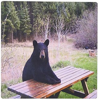 3dRose LLC 8 x 8 x 0.25 Inches Mouse Pad, Black Bear Ready for Lunch (mp_100971_1)
