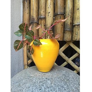 SMALL CONE SHAPED POT - YELLOW