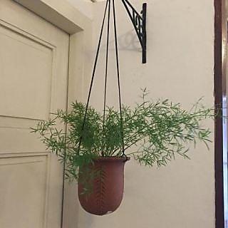 Mushroom Hanging Pot