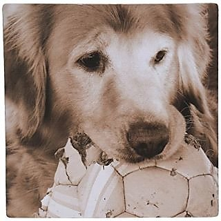 3dRose LLC 8 x 8 x 0.25 Inches Mouse Pad, Golden Retriever by Angel and Spot (mp_10943_1)