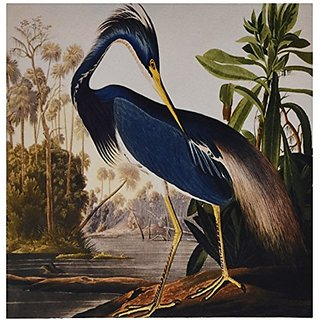 3dRose LLC 8 x 8 x 0.25 Inches Mouse Pad, Vintage John J Audubon Painting of A Blue Heron (mp_119842_1)