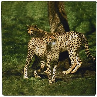 3dRose LLC 8 x 8 x 0.25 Inches Mouse Pad, Cheetah (mp_643_1)