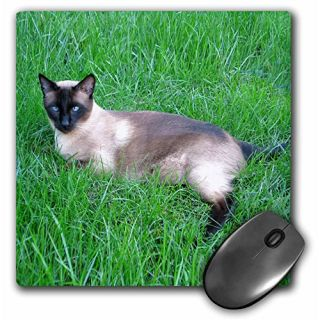 3dRose LLC 8 x 8 x 0.25 Inches Siamese Cat Mouse Pad (mp_4495_1)