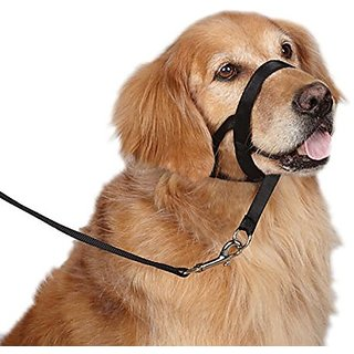 Guardian Gear Nylon Dog Head Collar, Small, Black