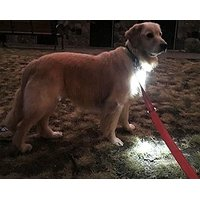 Dog Light, Dog Collar Light, Bubbas Leash Light - (NEW VERSION) 2 Per Pack - For Dog Walks & Backyard Monitoring. Attach