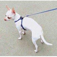 Coastal Pet Products DCP248NPK Nylon Lil Pals Adjustable Right Dog Harness, Neon Pink
