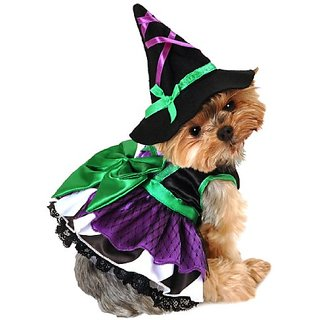 Anit Accessories 20-Inch Scary Witch Dog Costume, Large