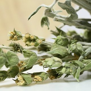Greek Mountain Tea (2 ounce)