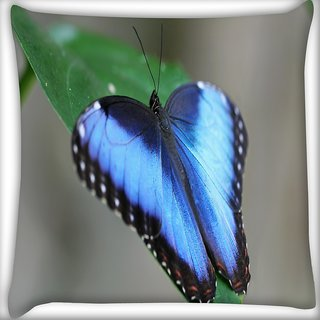 Snoogg Blue And Black Butterfly Digitally Printed Cushion Cover Pillow 16 x 16 Inch