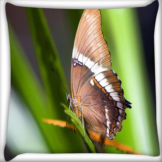 Snoogg Light Brown Butterfly Digitally Printed Cushion Cover Pillow 24 X 24 Inch