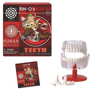 EIN-Os Science Human Biology Assortment by Tedco (Select=123:Teeth)