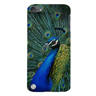 Snapdilla Beautiful National Bird Dancing Peacock Lovely Feather Quills Mobile Cover For Apple IPod Touch 5
