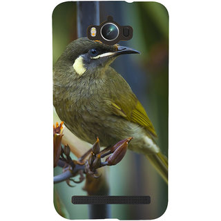 Snapdilla Green Background Beautiful Bird Sparrow Impressive Hd Photo Phone Case For Asus Zenfone Max