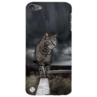 Fuson Designer Phone Back Case Cover Apple IPod Touch 5 :: Apple IPod 5 (5th Generation) ( The Cat On A Wall )