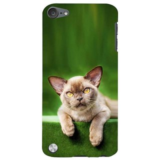 Fuson Designer Phone Back Case Cover Apple IPod Touch 5 :: Apple IPod 5 (5th Generation) ( A Cat That Stares )