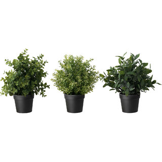 Combo Beauty Plant