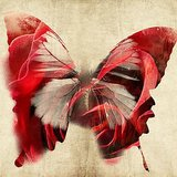 Wall Decor Butterfly Design In Vintage Look Printed Canvas