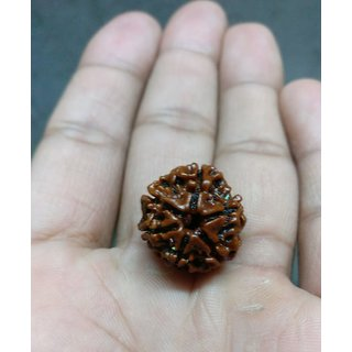 Rudraksha Rudraksh 6 face Mukhi Loose 8mm Beads Yoga Meditation
