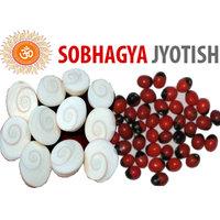 Mantra Siddha Gomti Chakra 11 Pcs + Free 11 Pcs Rakt Gunja For Wealth Benifits