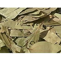 Indian Bay Leaf ( Tejpat , Tejpatta ) 100 Gm Pack