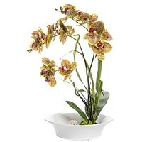 FENNEL Yellow Orchid Flowers In Ceramic Pot