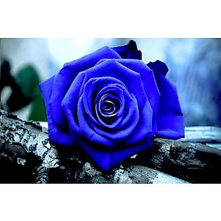 blue rose seeds 5 seeds in india shopclues online