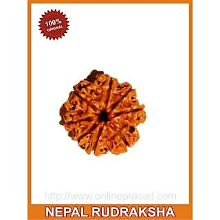 Eight (Aath) Mukhi Rudraksha (with silver capping)