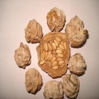 100% Natural Whole Dry kachari/Dried kacher/Cucumis pubescens/Sane/कचरी -250g