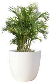 Yuccabe Italia P Cup Small Planter (Height 8 inch)
